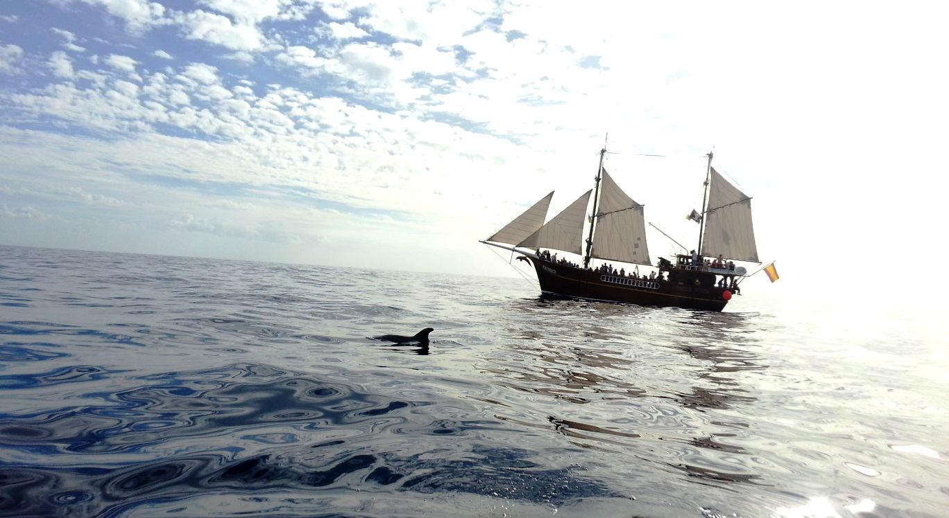 Avistamiento de delfines en Tenerife